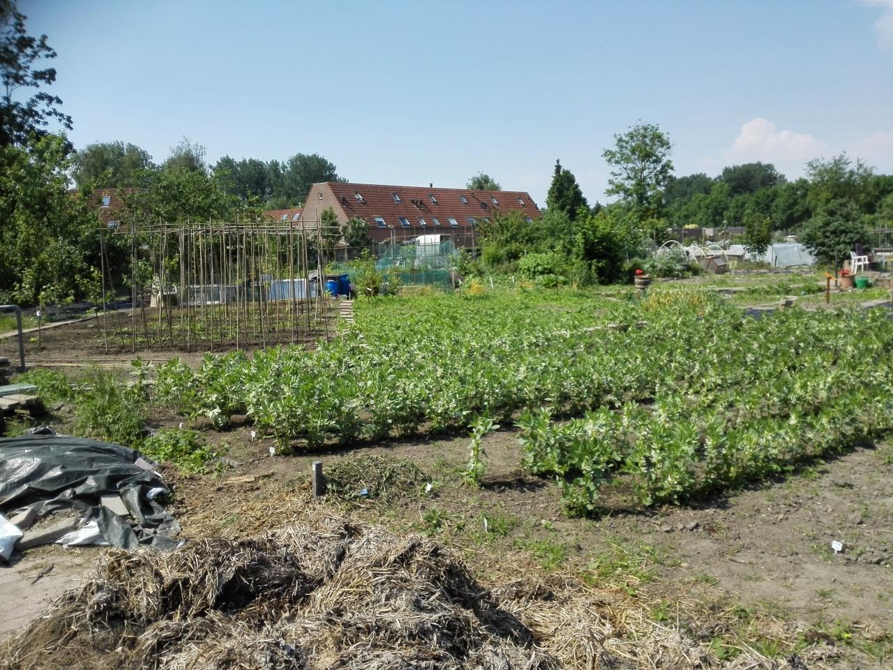 Goedkope Meubels Almere : Voedselloket almere vla voedseltuin